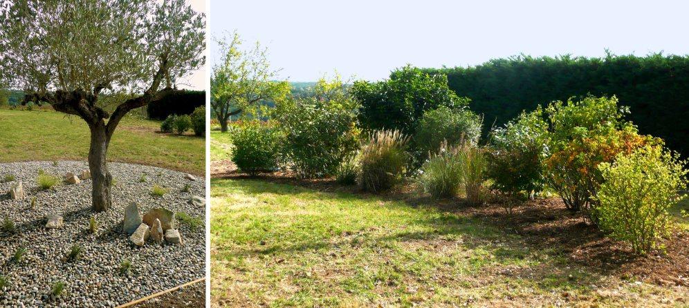 autour d'un olivier et massif arbustif