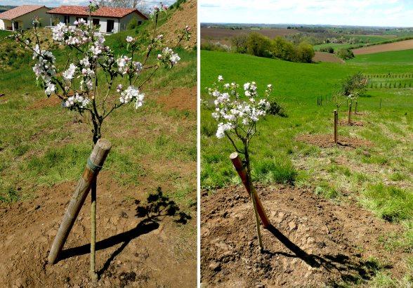 Verger : Pommiers, cerisiers, Pruniers, Figuiers