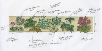 Plan de plantation | Justine Lehu paysagiste